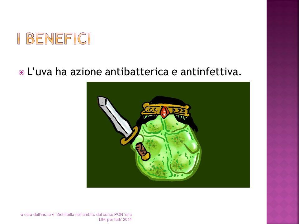 I benefici L'uva ha azione antibatterica e antinfettiva.