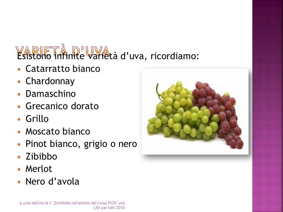 Varietà d'uva Esistono infinite varietà d'uva, ricordiamo: