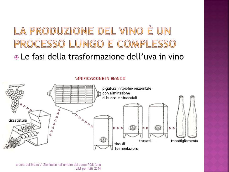 La produzione del vino è un processo lungo e complesso