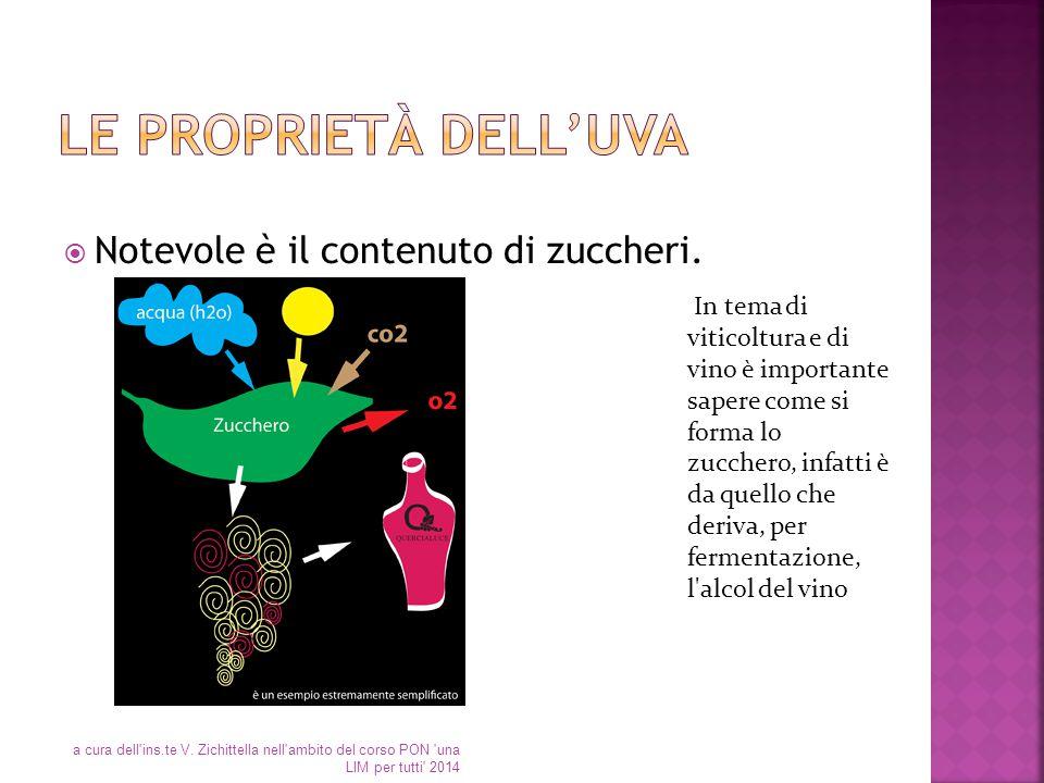 Le proprietà dell'uva Notevole è il contenuto di zuccheri.