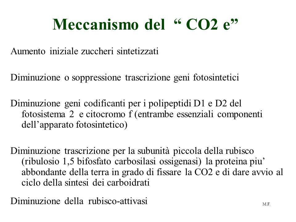 Meccanismo del CO2 e Aumento iniziale zuccheri sintetizzati
