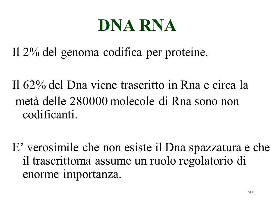 DNA RNA Il 2% del genoma codifica per proteine.