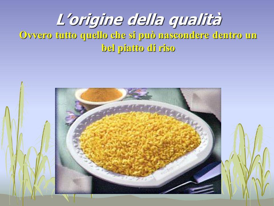 L'origine della qualità Ovvero tutto quello che si può nascondere dentro un bel piatto di riso
