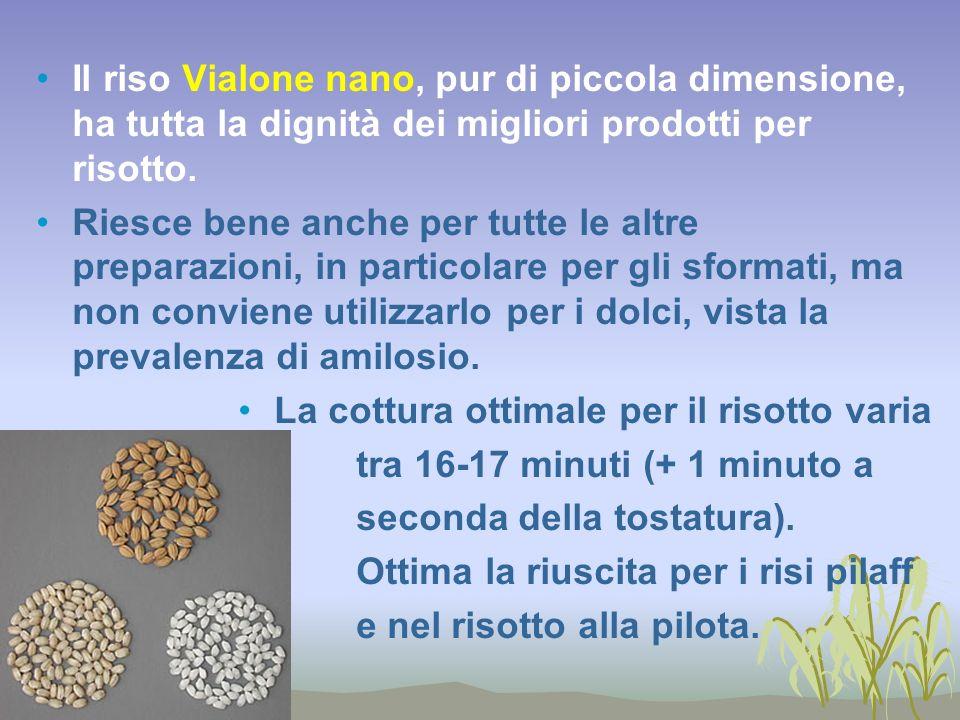 Il riso Vialone nano, pur di piccola dimensione, ha tutta la dignità dei migliori prodotti per risotto.