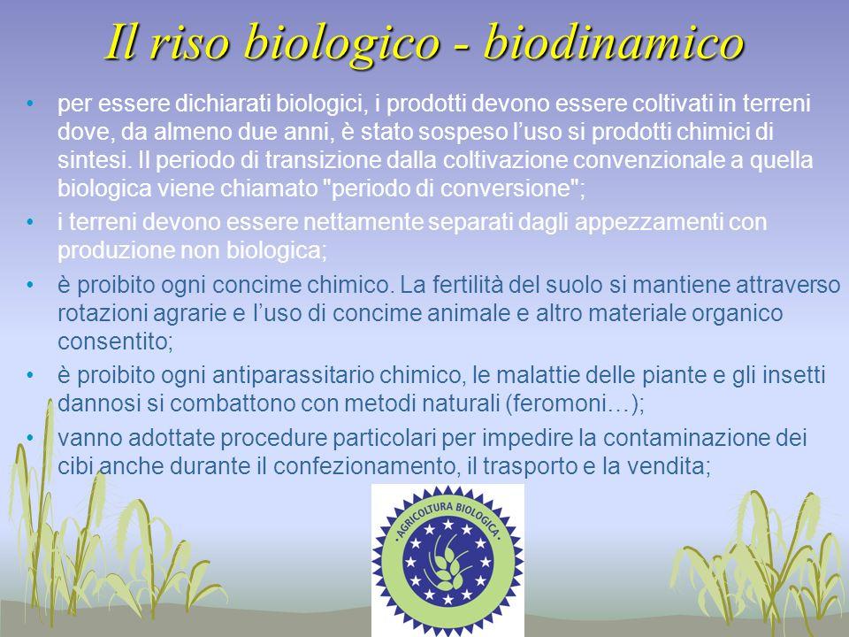 Il riso biologico - biodinamico