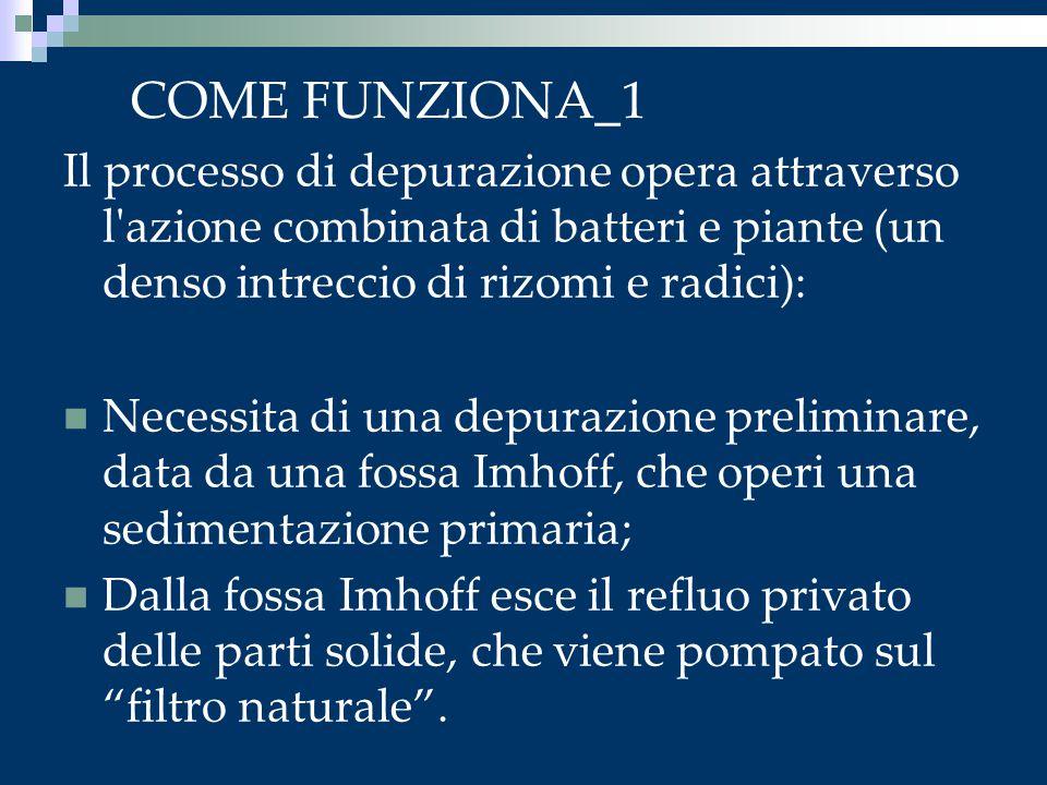 COME FUNZIONA_1 Il processo di depurazione opera attraverso l azione combinata di batteri e piante (un denso intreccio di rizomi e radici):