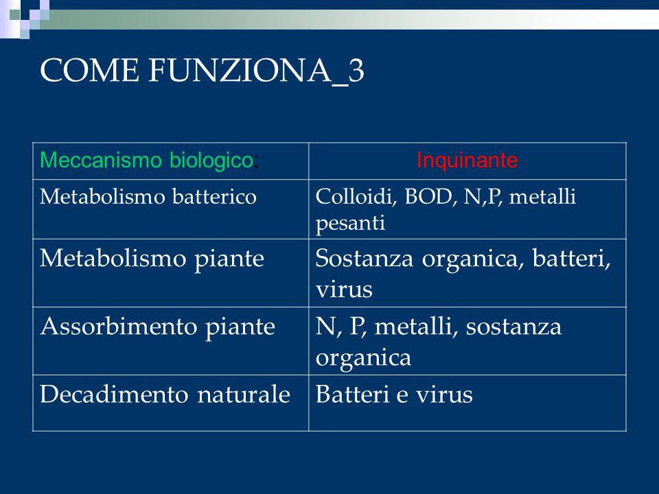 COME FUNZIONA_3 Metabolismo piante Sostanza organica, batteri, virus