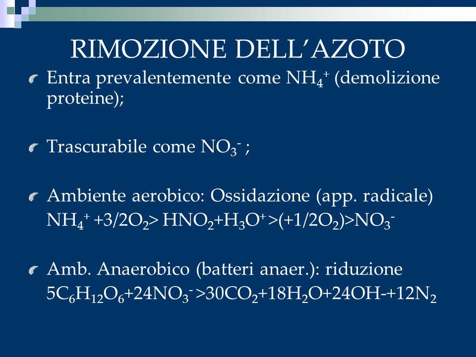 RIMOZIONE DELL'AZOTO Entra prevalentemente come NH4+ (demolizione proteine); Trascurabile come NO3- ;