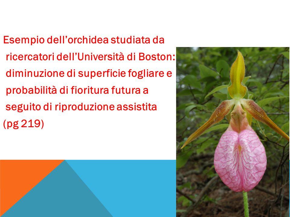 Esempio dell'orchidea studiata da ricercatori dell'Università di Boston: diminuzione di superficie fogliare e probabilità di fioritura futura a seguito di riproduzione assistita (pg 219)