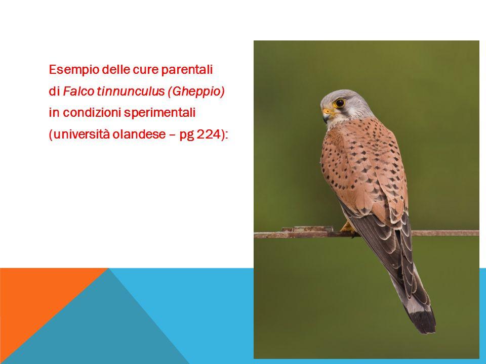 Esempio delle cure parentali di Falco tinnunculus (Gheppio) in condizioni sperimentali (università olandese – pg 224):