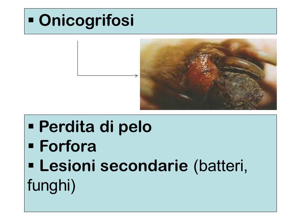 Onicogrifosi Perdita di pelo Forfora Lesioni secondarie (batteri, funghi)