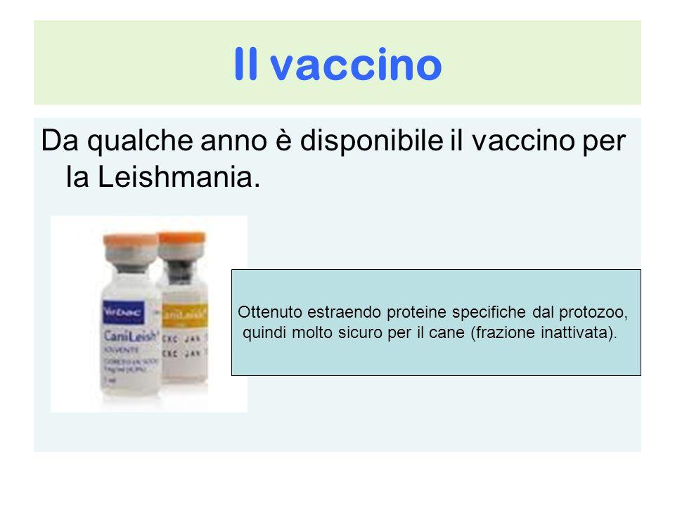 Il vaccino Da qualche anno è disponibile il vaccino per la Leishmania.