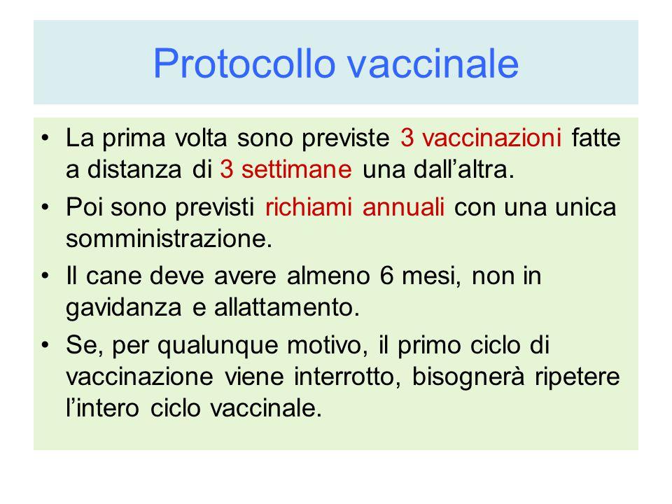 Protocollo vaccinale La prima volta sono previste 3 vaccinazioni fatte a distanza di 3 settimane una dall'altra.