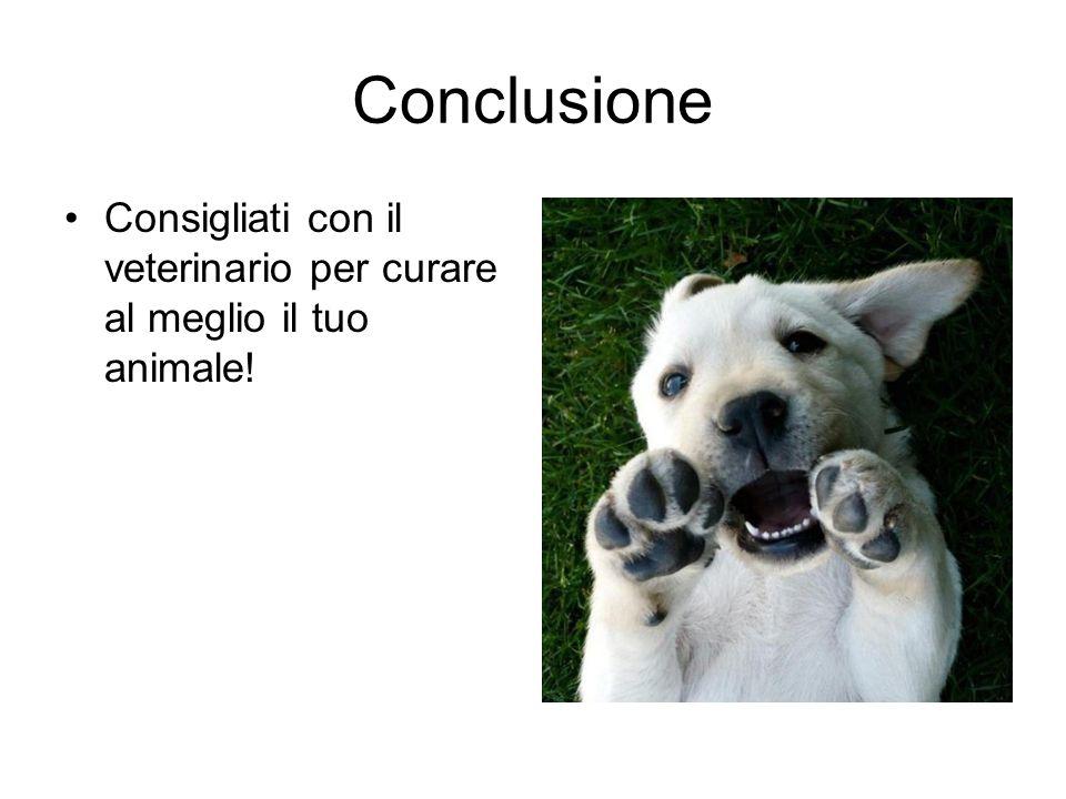 Conclusione Consigliati con il veterinario per curare al meglio il tuo animale!