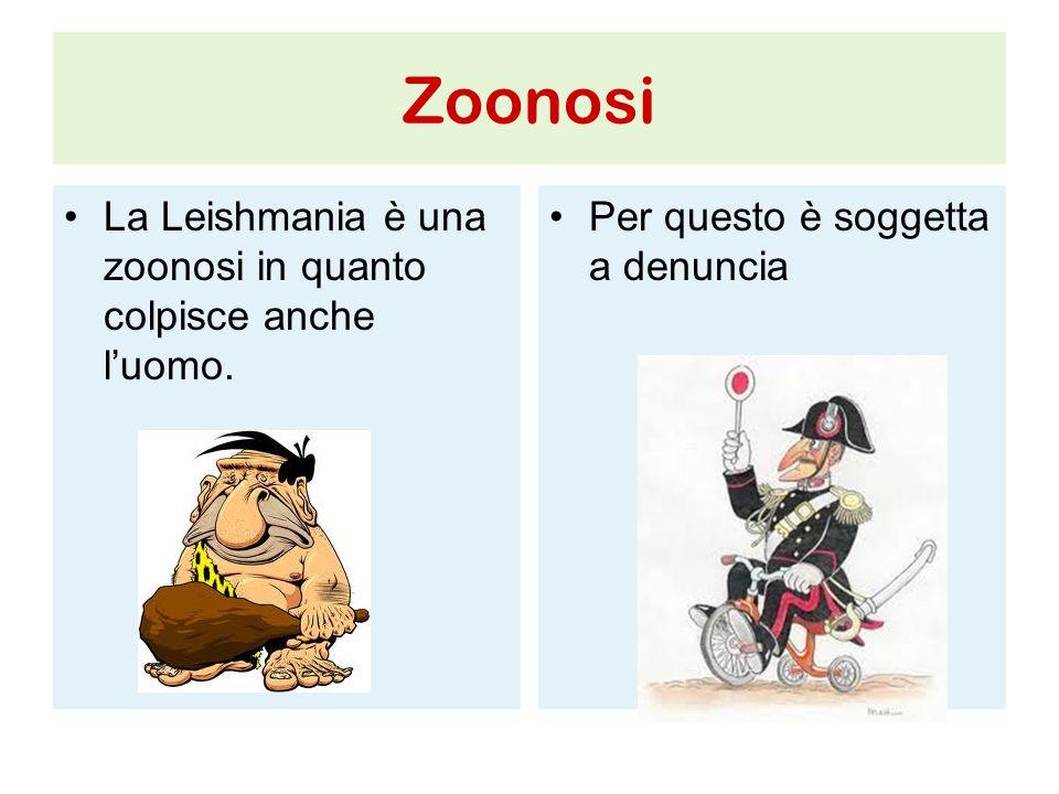 Zoonosi La Leishmania è una zoonosi in quanto colpisce anche l'uomo.