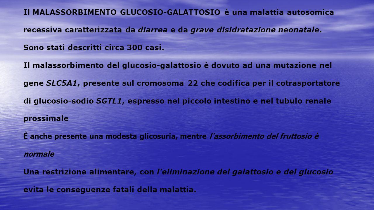 Il MALASSORBIMENTO GLUCOSIO-GALATTOSIO è una malattia autosomica recessiva caratterizzata da diarrea e da grave disidratazione neonatale.