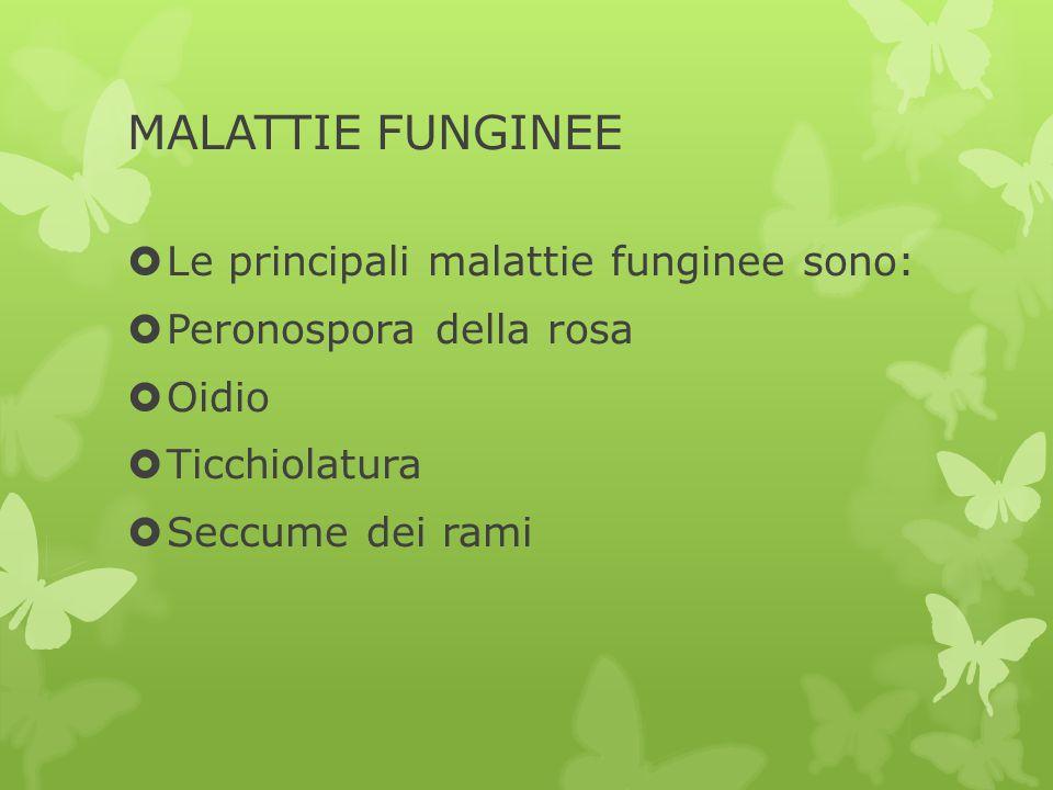 MALATTIE FUNGINEE Le principali malattie funginee sono: