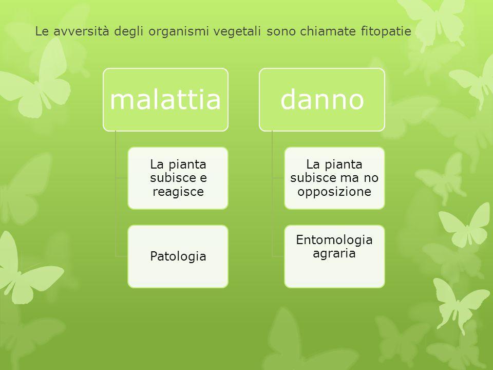 Le avversità degli organismi vegetali sono chiamate fitopatie