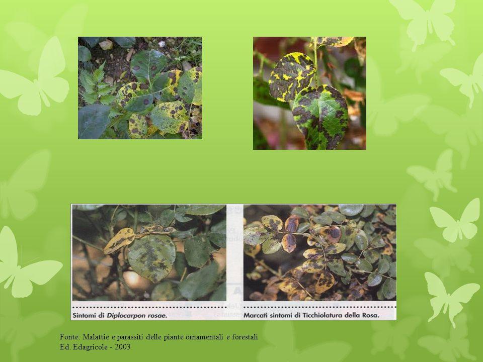 Fonte: Malattie e parassiti delle piante da fiore ornamentali e forestali Ed. Edagricole