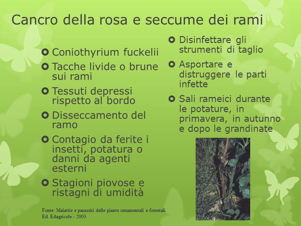Cancro della rosa e seccume dei rami