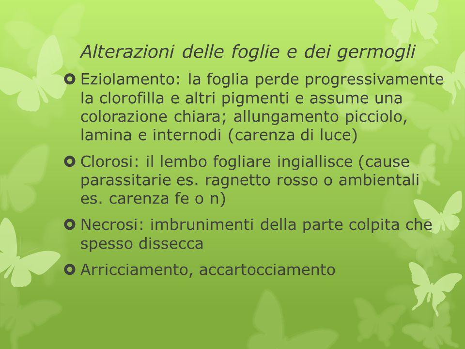 Alterazioni delle foglie e dei germogli
