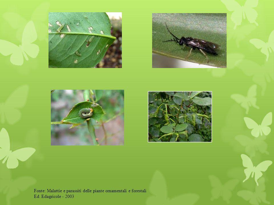 Fonte: Malattie e parassiti delle piante ornamentali e forestali