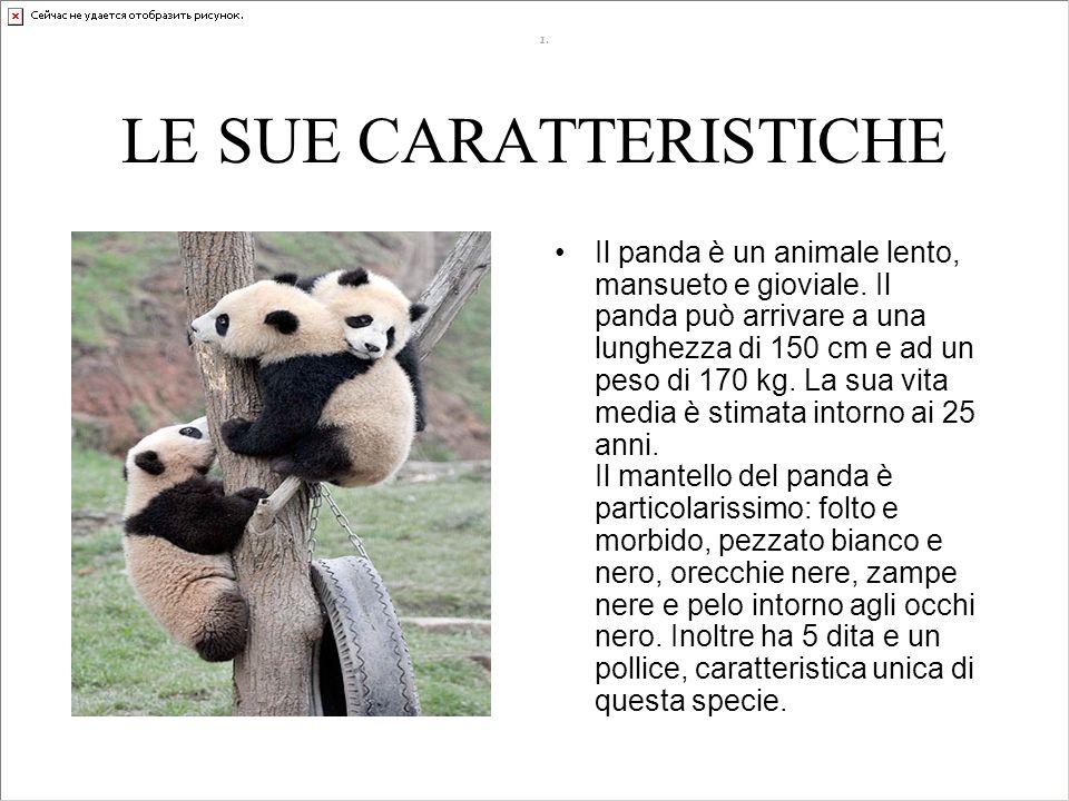 LE SUE CARATTERISTICHE
