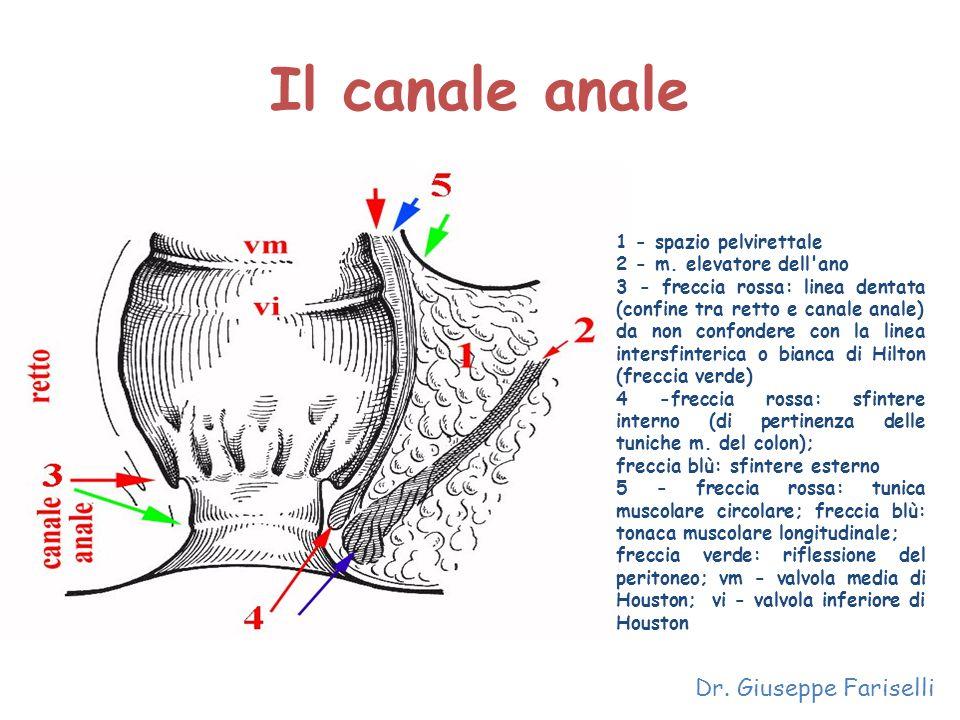 Il canale anale Dr. Giuseppe Fariselli 1 - spazio pelvirettale