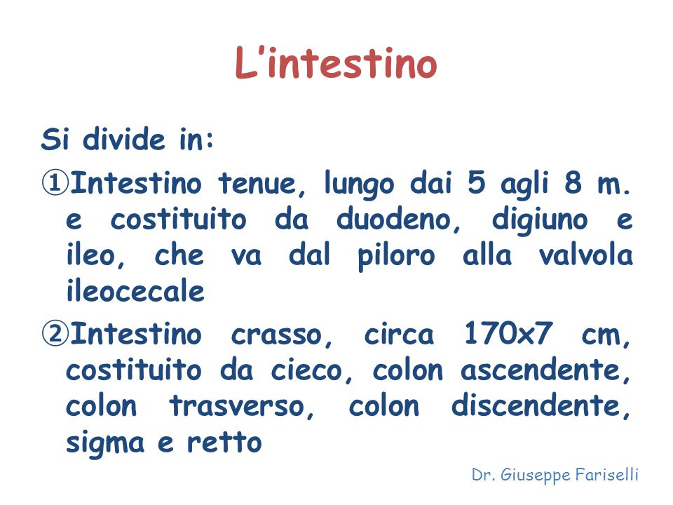 L'intestino Si divide in:
