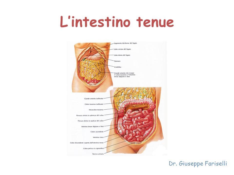 L'intestino tenue Dr. Giuseppe Fariselli