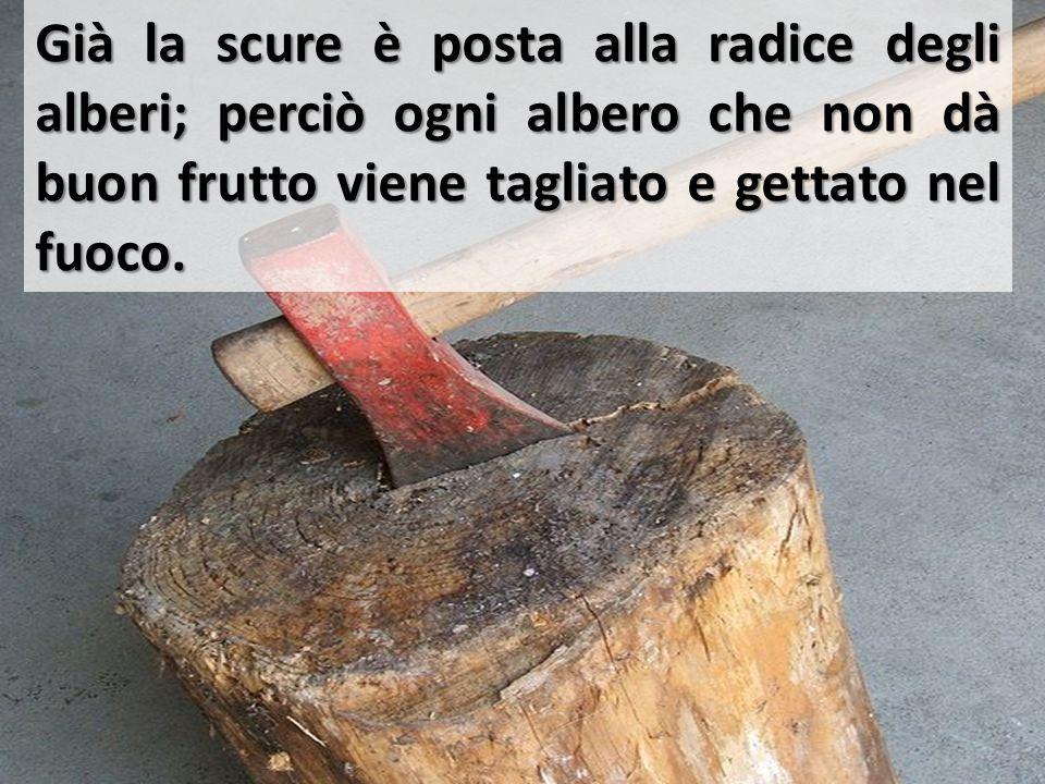 Già la scure è posta alla radice degli alberi; perciò ogni albero che non dà buon frutto viene tagliato e gettato nel fuoco.