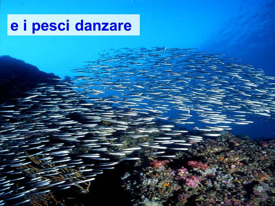 e i pesci danzare