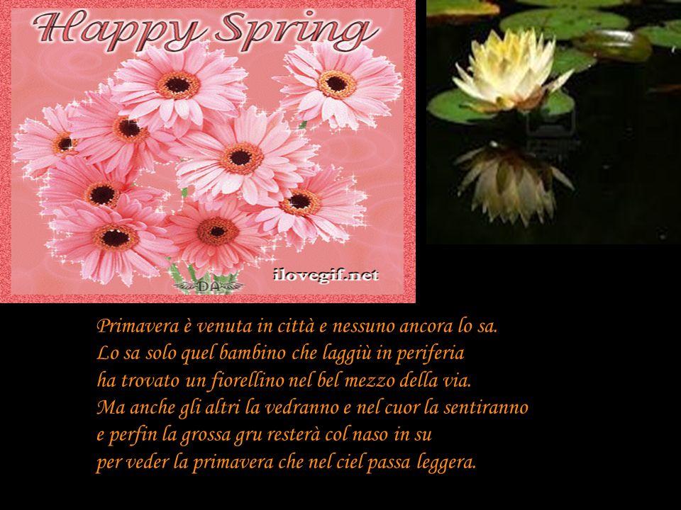 Primavera è venuta in città e nessuno ancora lo sa