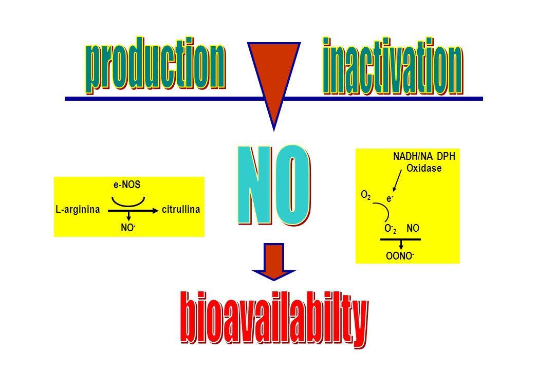 NO production inactivation bioavailabilty O2 O-2 e- NADH/NA DPH