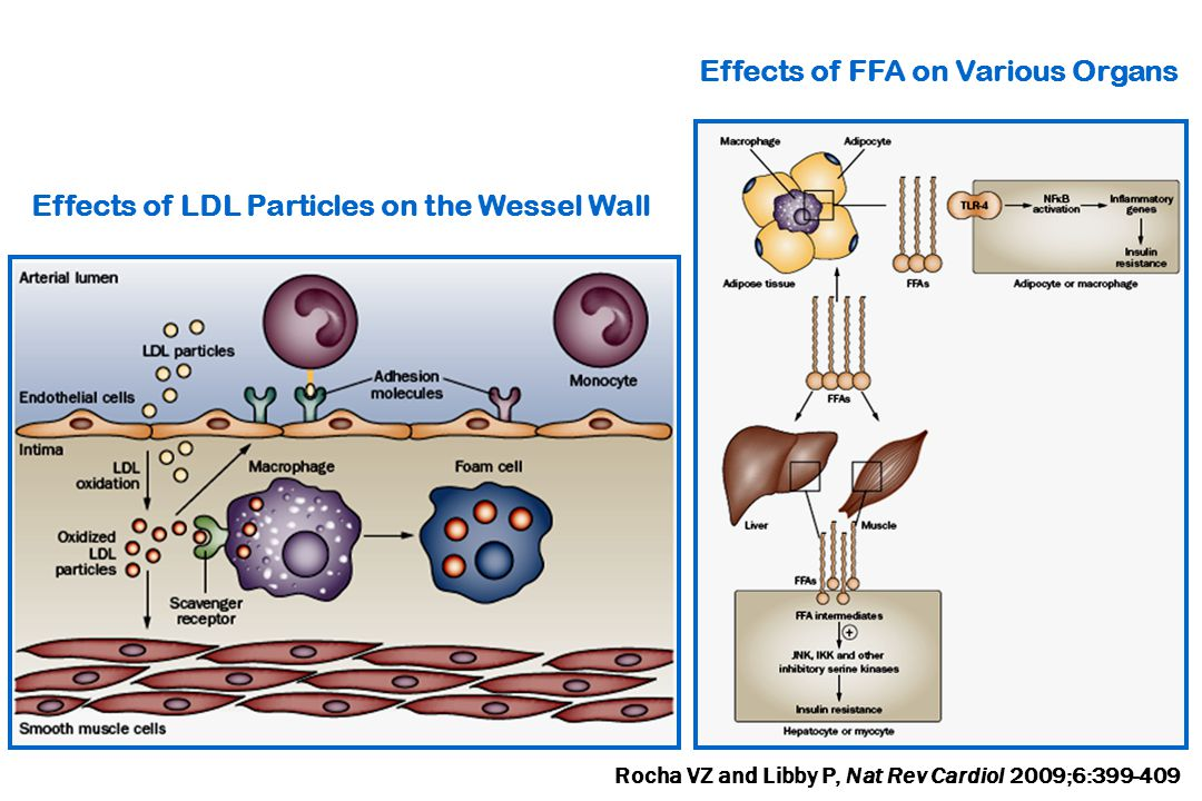 Effects of FFA on Various Organs