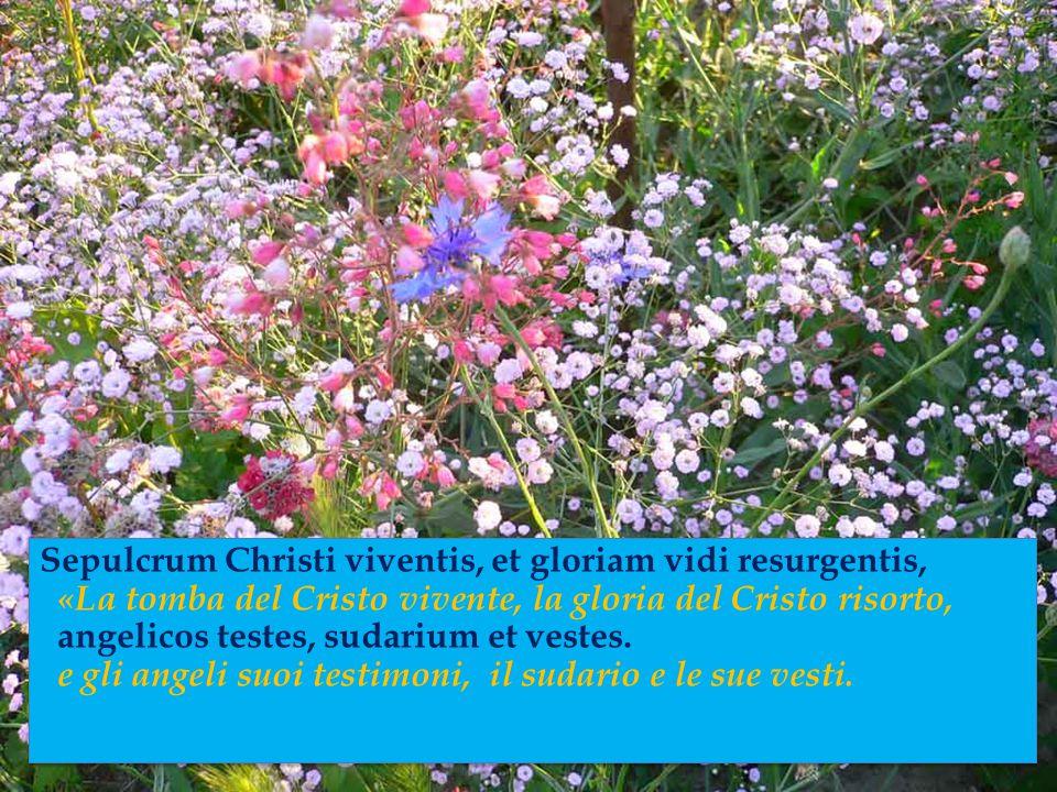 Sepulcrum Christi viventis, et gloriam vidi resurgentis, «La tomba del Cristo vivente, la gloria del Cristo risorto, angelicos testes, sudarium et vestes.