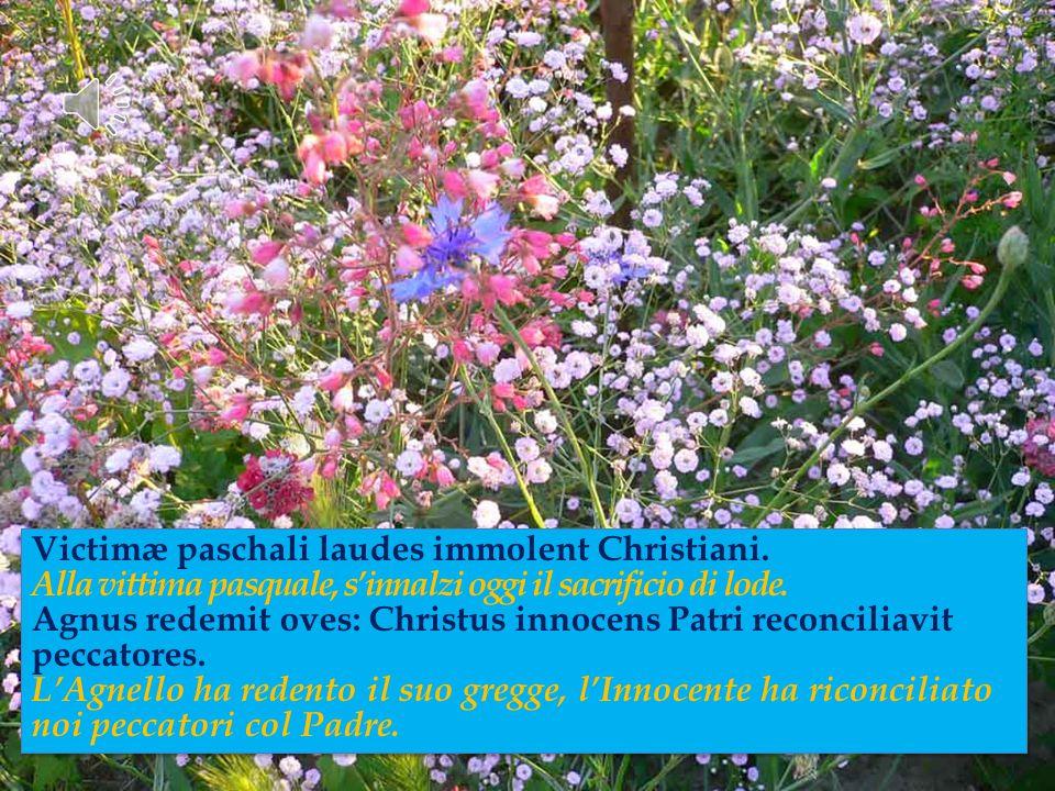 Victimæ paschali laudes immolent Christiani