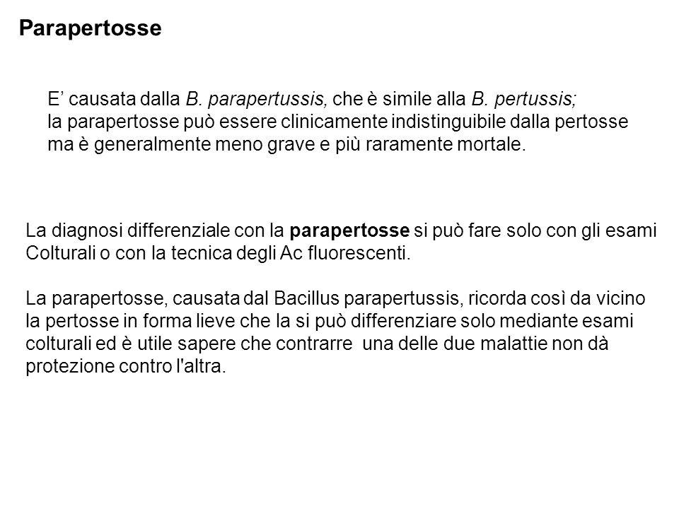 Parapertosse E' causata dalla B. parapertussis, che è simile alla B. pertussis;