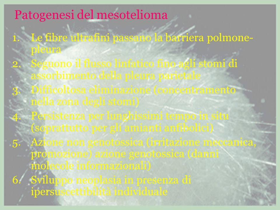 Patogenesi del mesotelioma