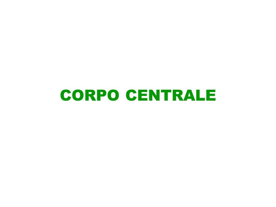 CORPO CENTRALE