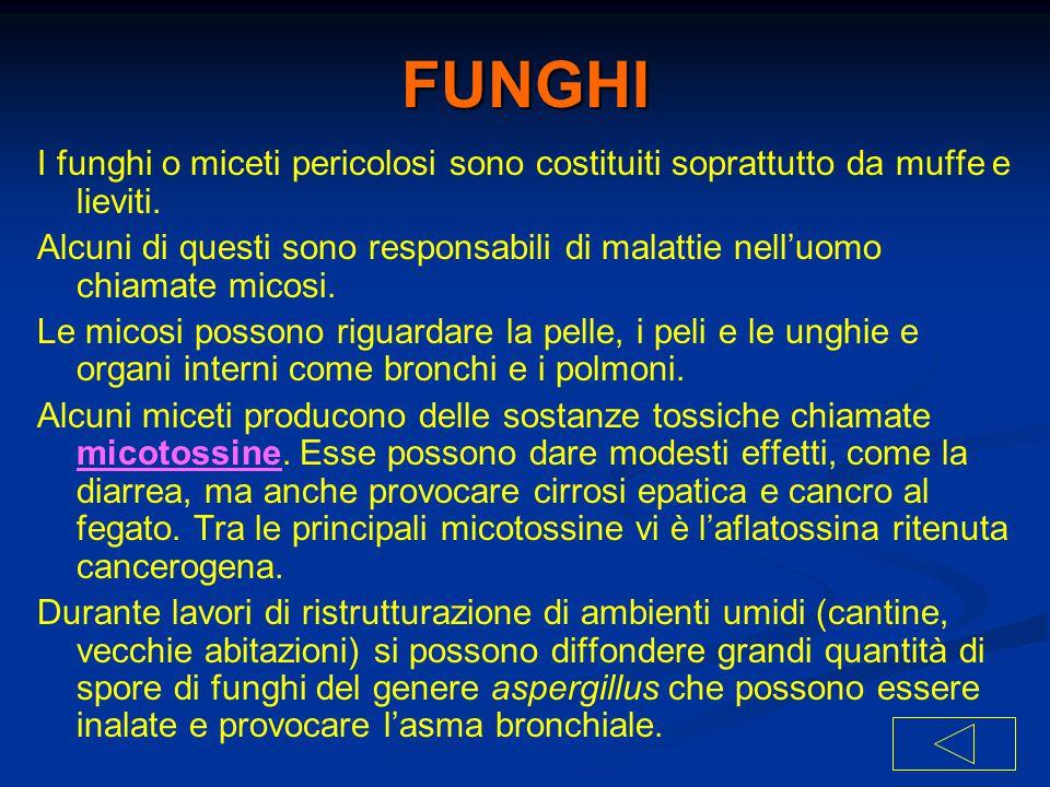 FUNGHI I funghi o miceti pericolosi sono costituiti soprattutto da muffe e lieviti.