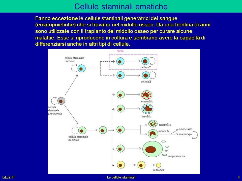 Cellule staminali ematiche