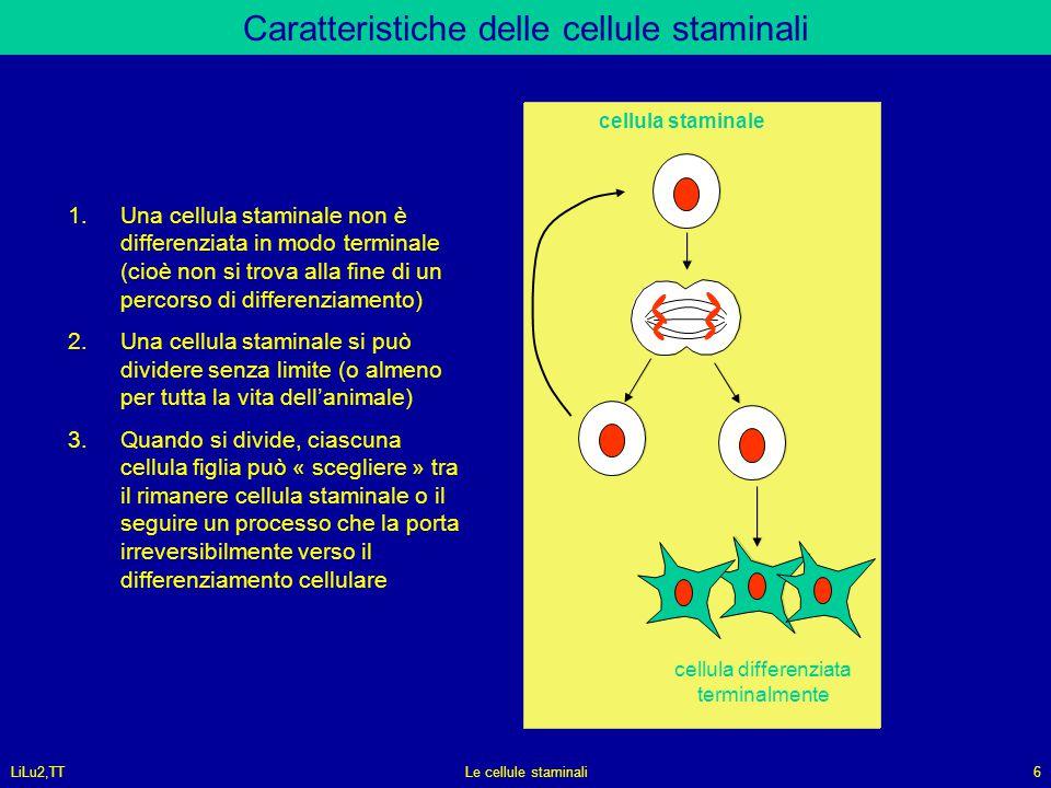 Caratteristiche delle cellule staminali