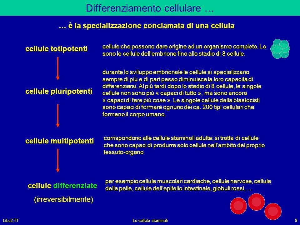 Differenziamento cellulare …