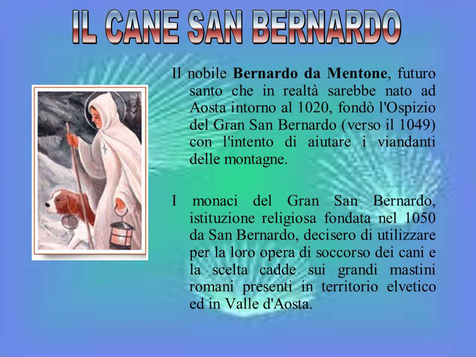 IL CANE SAN BERNARDO
