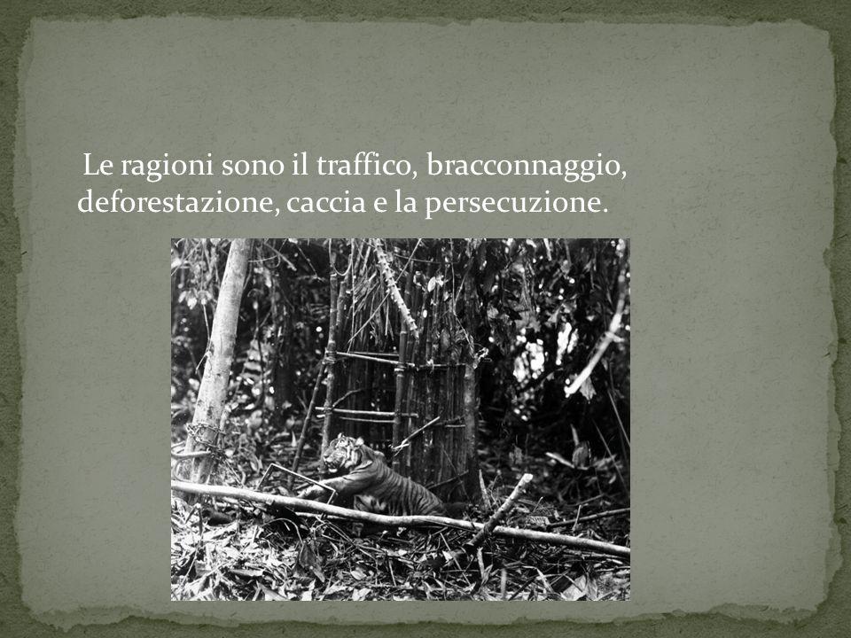 Le ragioni sono il traffico, bracconnaggio, deforestazione, caccia e la persecuzione.