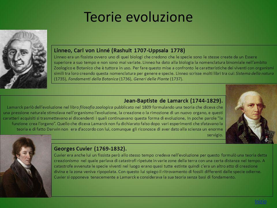Teorie evoluzione Linneo, Carl von Linné (Rashult 1707-Uppsala 1778)