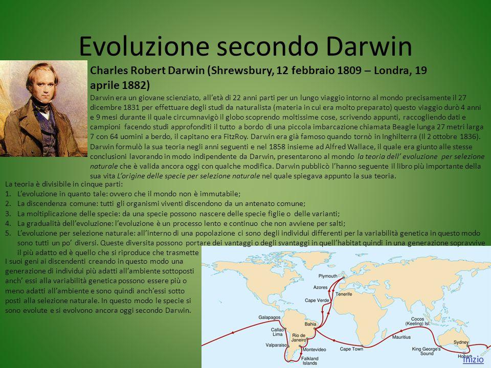 Evoluzione secondo Darwin