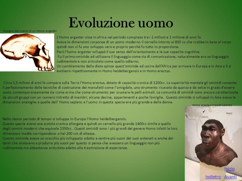 Evoluzione uomo Inizio Indietro Avanti