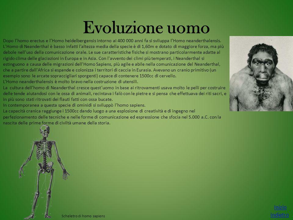 Evoluzione uomo Inizio Indietro